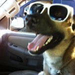 Mav-ster knows how to rock shades.